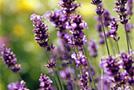 5 растений для вашего здоровья