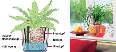 Три способа правильной посадки и полива комнатных растений