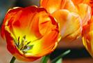 Вальс цветов: дарите любимым радость