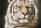 Восточный гороскоп 2010 год Белого Тигра