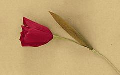 Придание формы листьям и прикрепление листьев к цветам из гофрированной бумаги